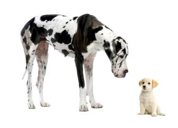bigdoglittledog2